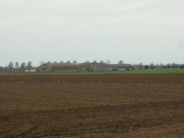 Eau Brink Farm