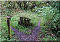SJ9653 : Track across disused Railway, near Horse Bridge, Staffordshire by Roger  Kidd