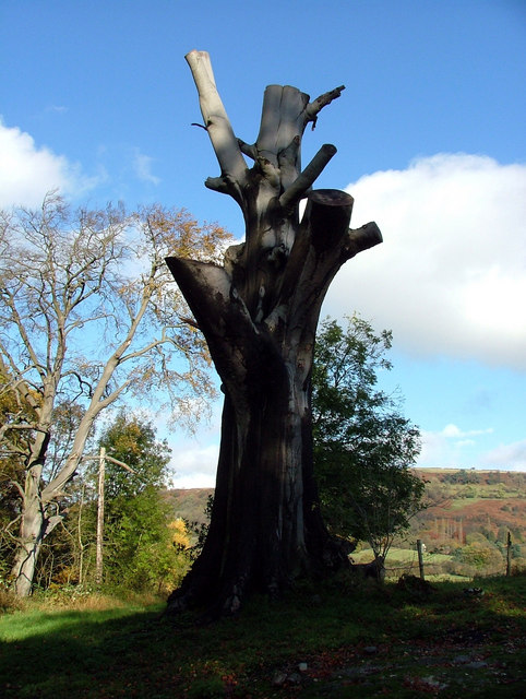 Dead tree at Willersley Castle