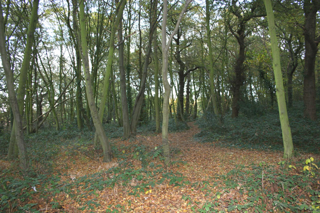 Kingley Wood