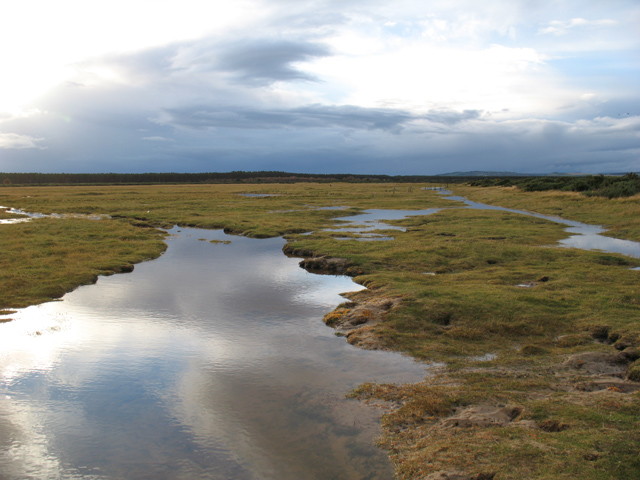 Saltmarsh on the Carse of Delnies