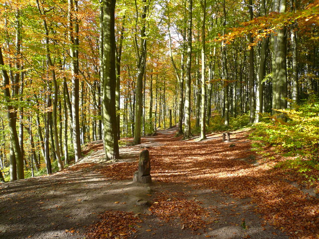 Linacre Beech Wood in Autumn