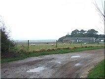 SZ3983 : Farm Track by Martyn Davies