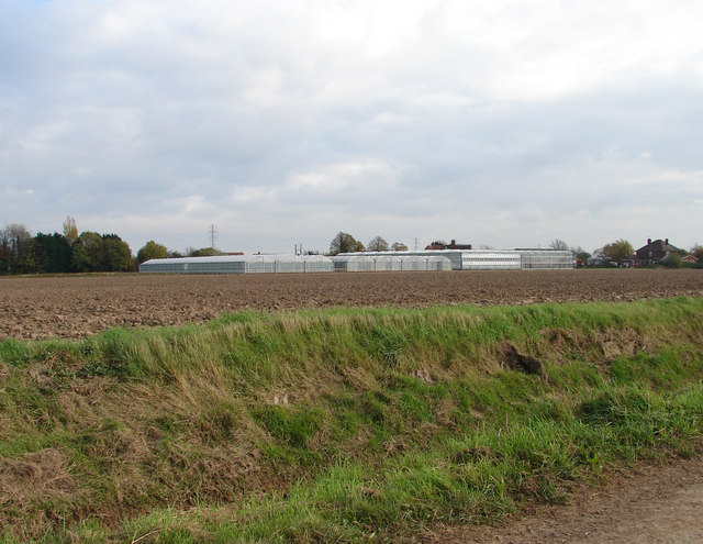 Greenhouses Near Sutton Corner