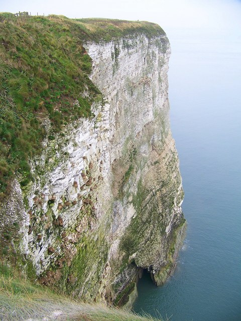Bempton's Chalk Cliffs
