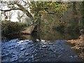 SX3291 : River Tamar at Northcott Wood by Derek Harper