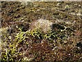 NS4107 : An Assortment of Mosses and Lichens by Mary and Angus Hogg