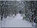 NS8157 : Murdostoun  woods in winter by dan m