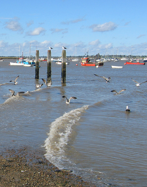 Moorings on the river Deben