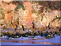 SX8957 : Sandstone cliffs, Broadsands beach - early morning by Tom Jolliffe