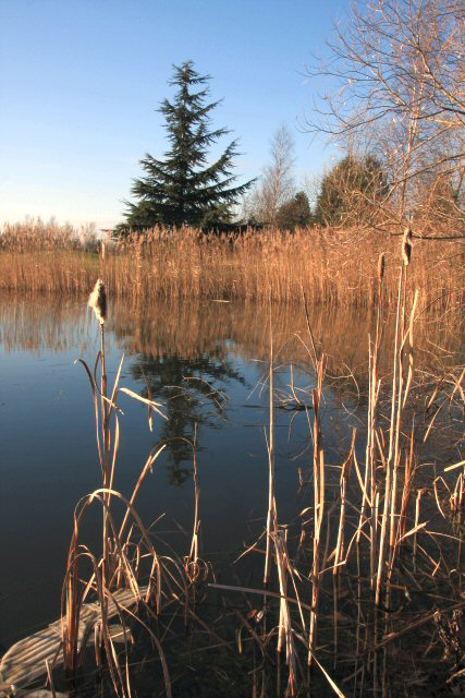 Pond at Lakeside Lodge Golf Course
