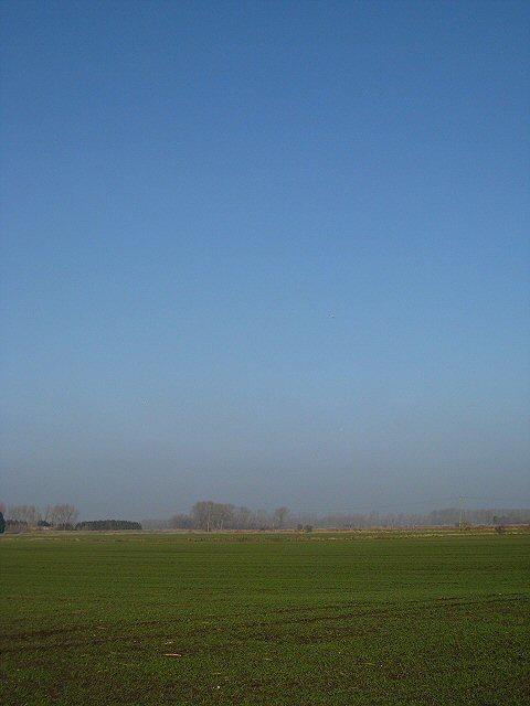 Winter wheat on Grime Fen