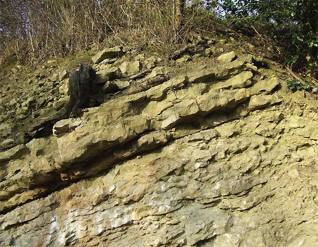 Silurian  Limestone (detail), Dudley, Worcestershire