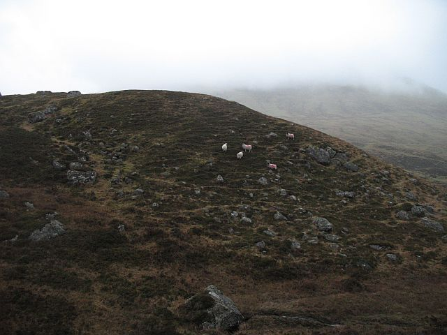 Sheep below Meall na h-Iolaire