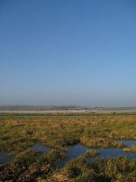 Frozen Washlands, Lakenheath Fen