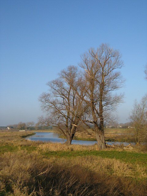 Trees on the bank of The Little Ouse