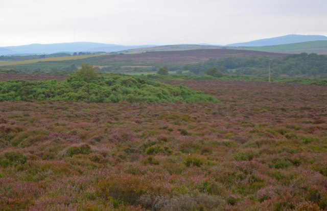 Looking south over the heather of Kempstone Hill