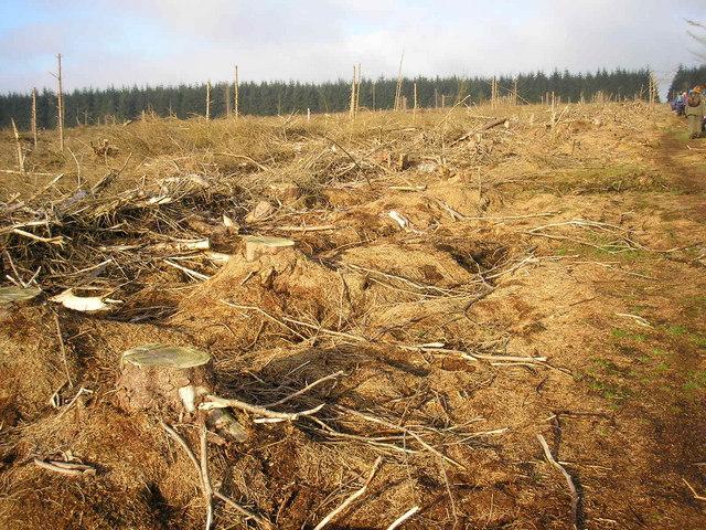 Plantation clearing