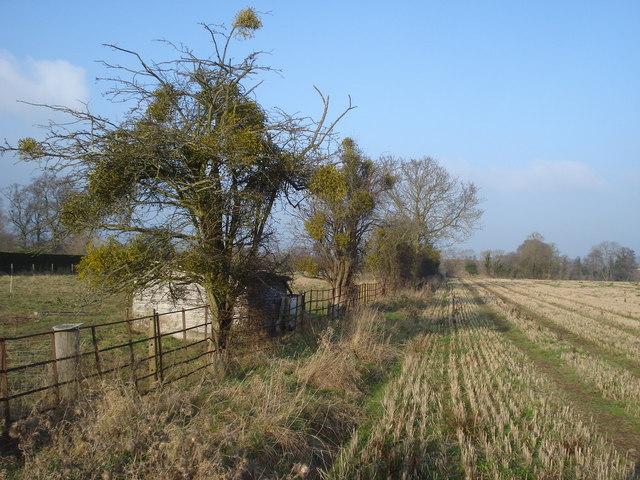 Footpath near Hanley Swan