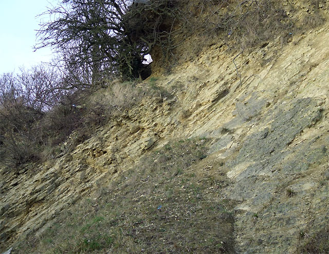 Limestone Strata, Dudley, Worcestershire