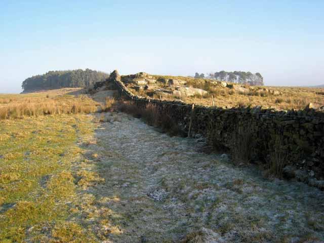 Wall near Highstead Ash Farm