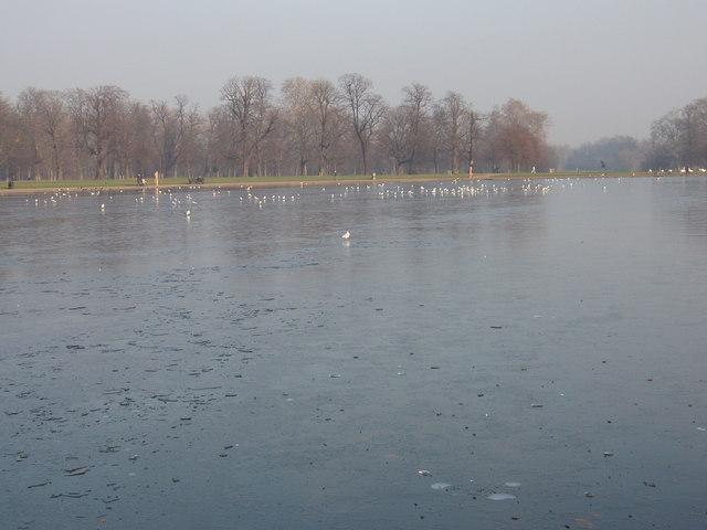 Seagulls on the frozen Round Pond