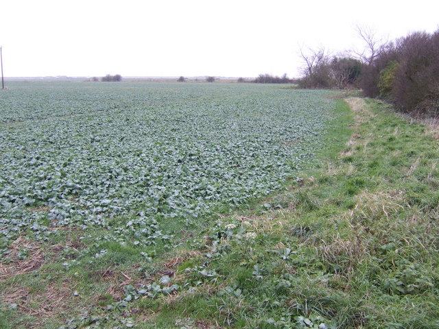 Arable land south of Sutton-on-Sea