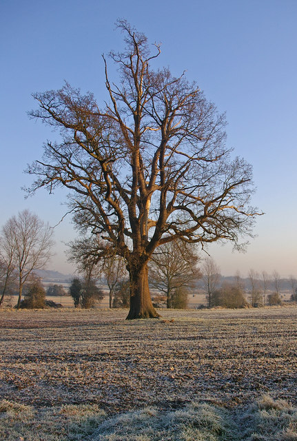 Bare Tree In Winter Ian Capper Geograph Britain And