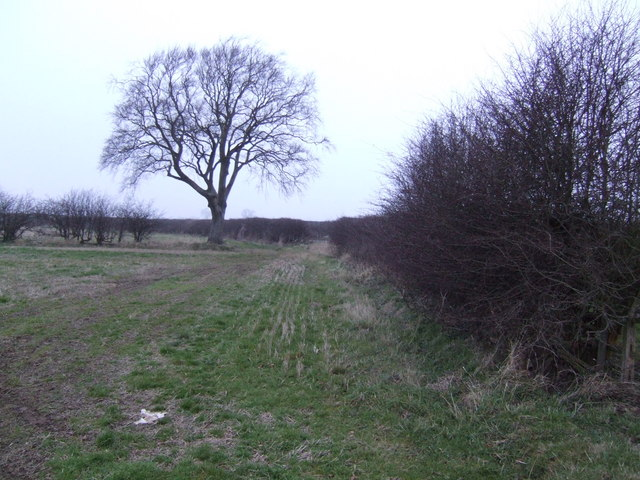 Single tree on the Wolds