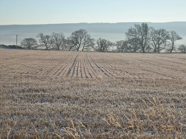 Frosty stubble at Bellevue