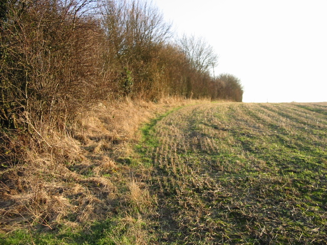 Field boundary along Singledge Lane