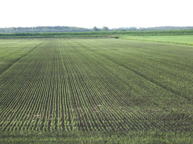Neat rows of young crops