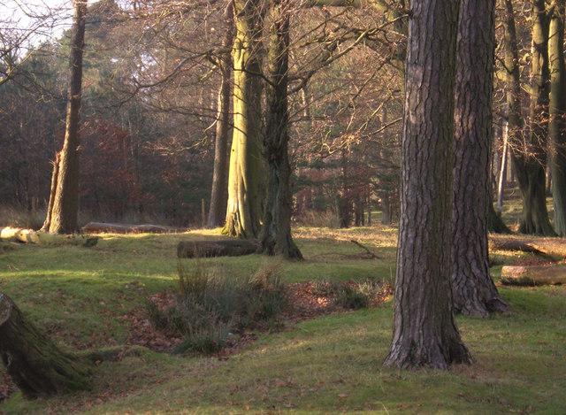 Granby Wood