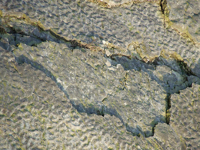 Limestone Ripples (detail), Dudley, Worcestershire