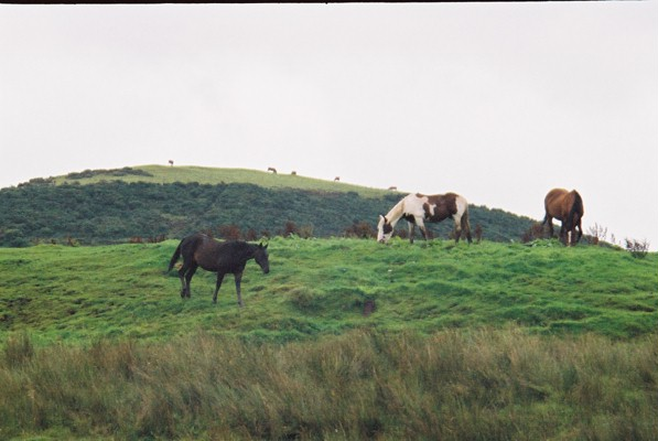 Horses in a field, High Marebeck