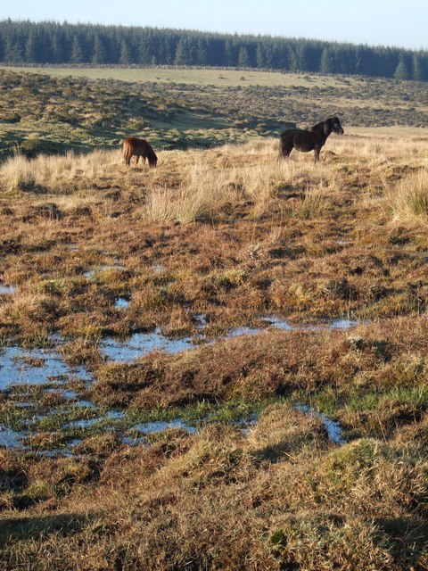 Bog and ponies on Bodmin Moor