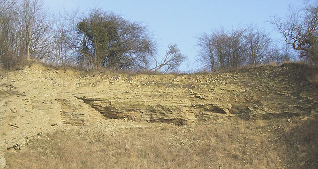 Limestone Exposure, Dudley, Worcestershire