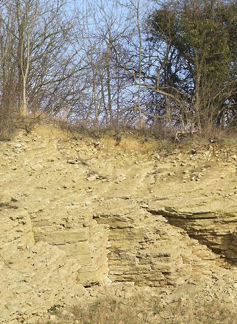 Limestone Strata, Dudley, Worcestershire