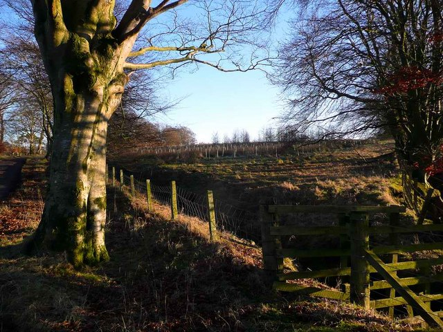 New tree planting at Auchmannoch