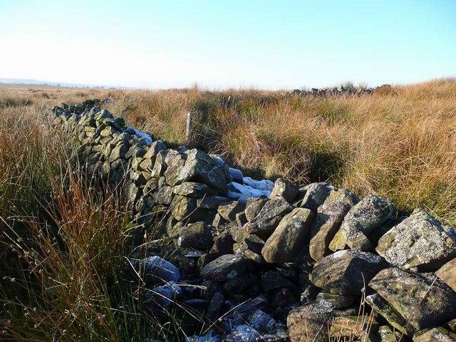 Ruined sheep-fank above Dentibert Well