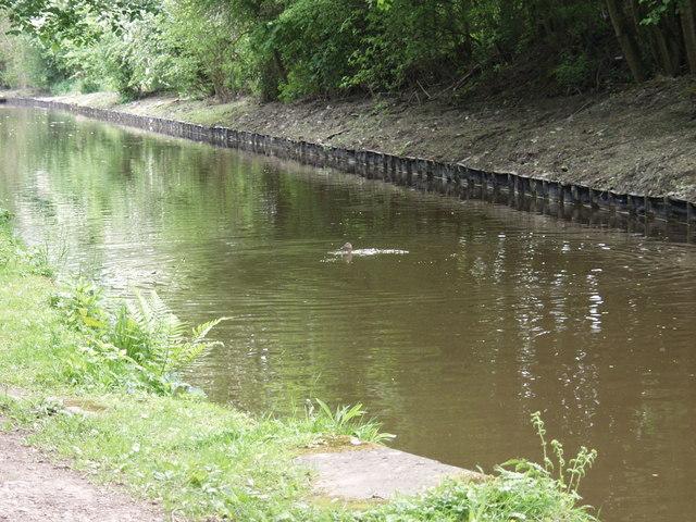 Bank improvements on the Llangollen Canal