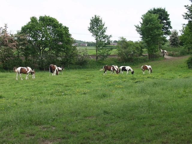 Ponies from Afon-Bradley Farm