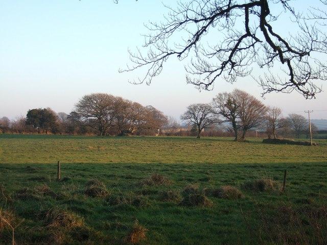 Trees following parish boundary