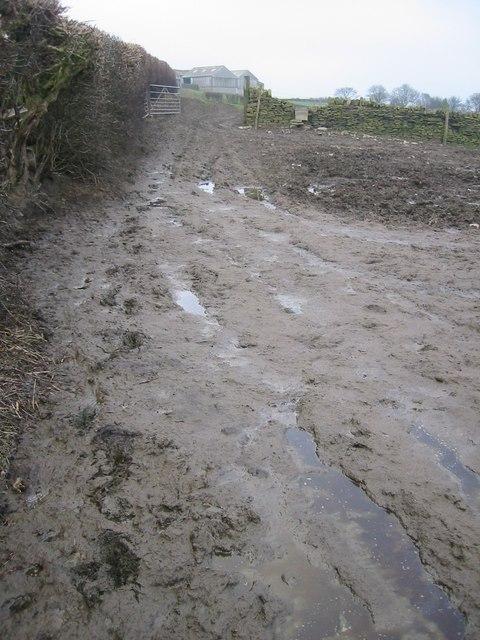 Footpath towards Taylor Hill