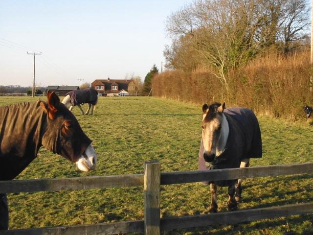 Horses in paddock on Singledge Lane