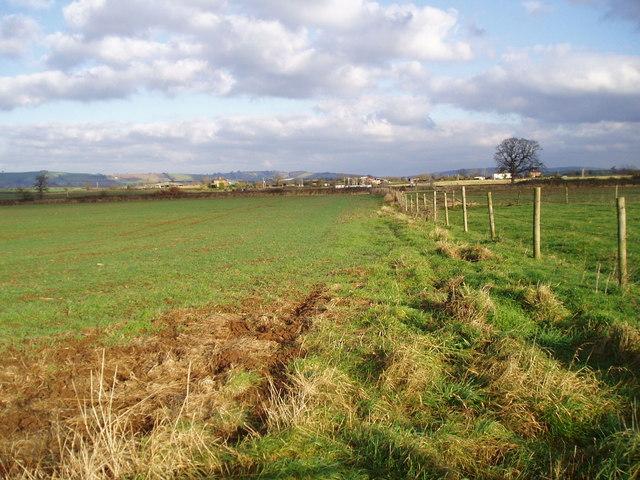 Fields near River Creedy