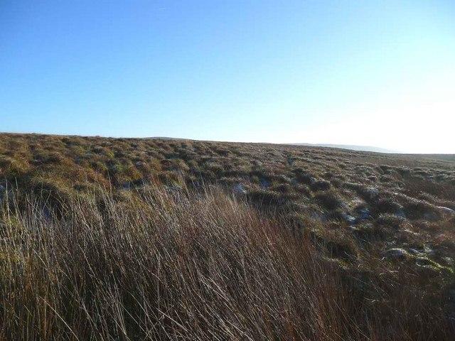 Bog and tussock on Auchmannoch Muir