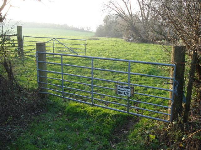 Pasture at Woodbridge Farm