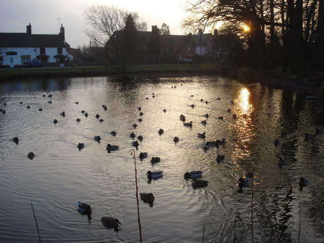 Swan Pool at sundown