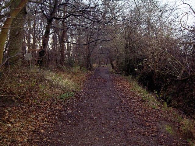 Limbo Lane